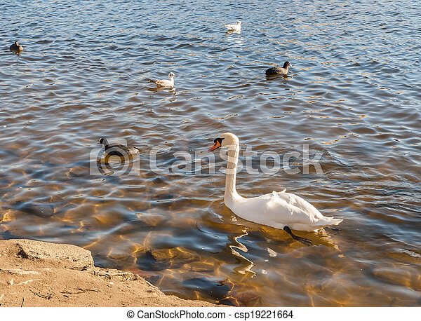 Wild birds on the lake - csp19221664