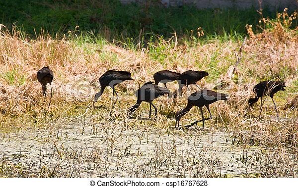 wild birds - csp16767628
