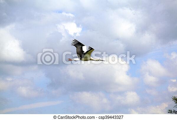 wild birds - csp39443327