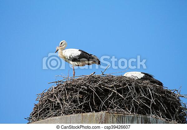 wild birds - csp39426607