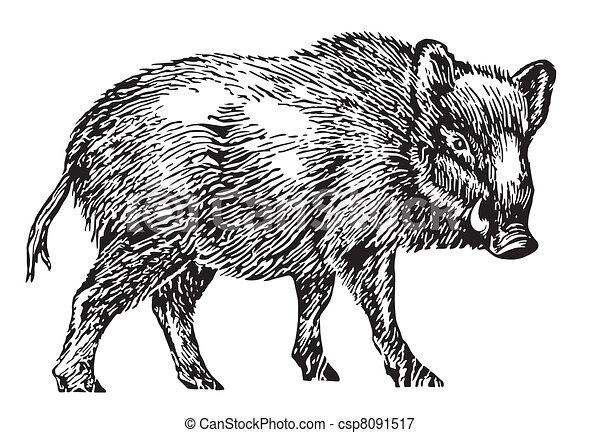 wild boar - csp8091517