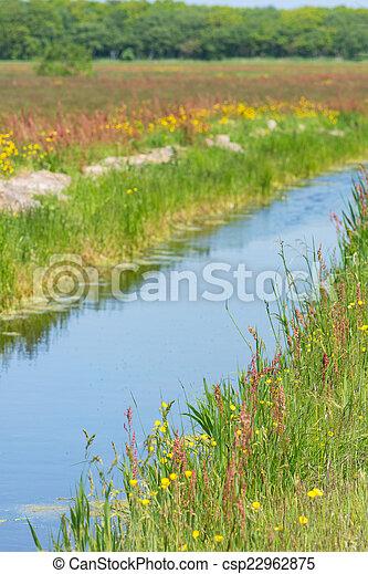 Wild buttercups near ditch - csp22962875