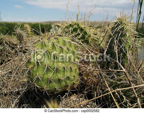 Wild Cactus Plants - csp0002582