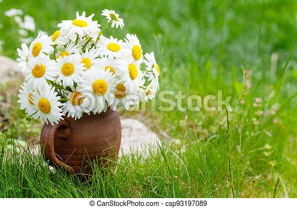 Wild chamomile bouquet - csp93197089