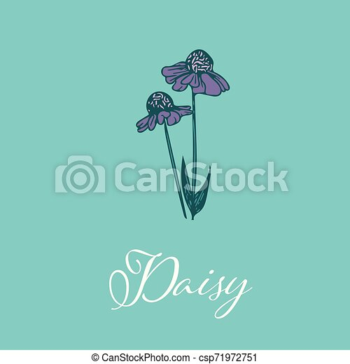 Wild Daisy flower design isolated object - csp71972751