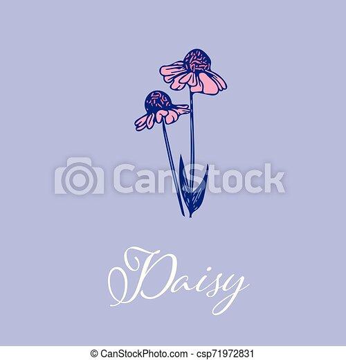 Wild Daisy flower design isolated object - csp71972831