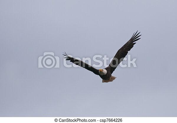 Wild Eagle In The Sky