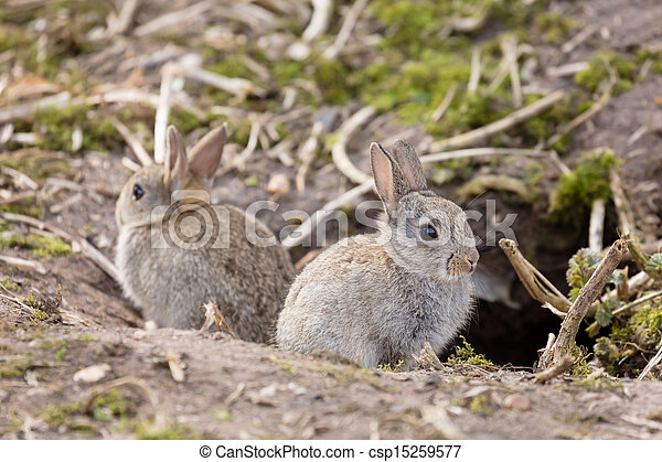 how to raise rabbits outside