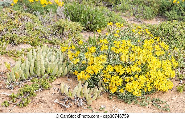 Wild flowers at Groenriviermond  - csp30746759
