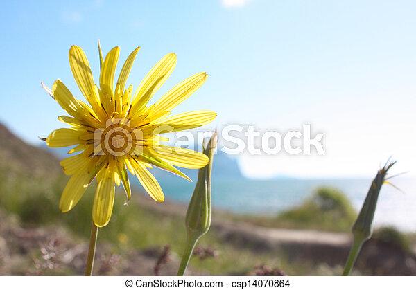 Wild Flowers In Crimea Mountains Taken In May