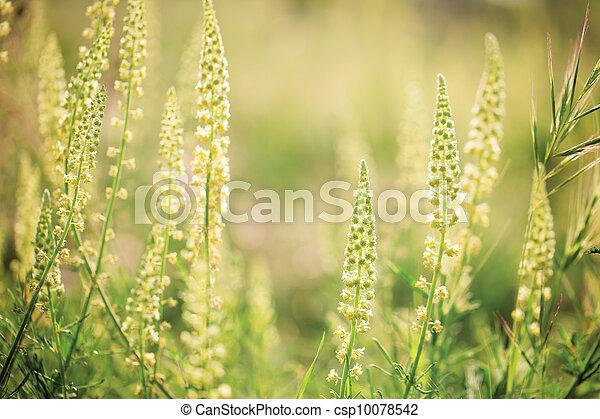 Wild flowers in the sunshine - csp10078542