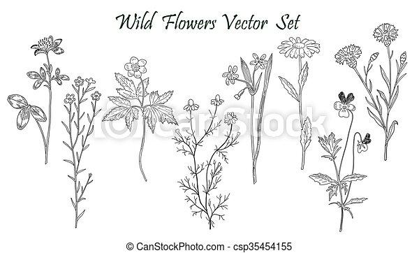 Wild Flowers set - csp35454155