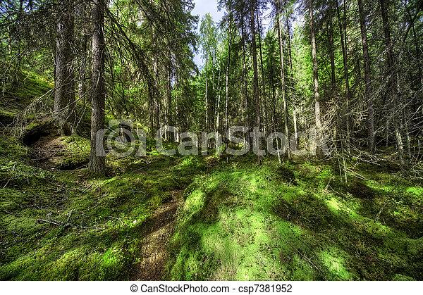 Wild forest - csp7381952