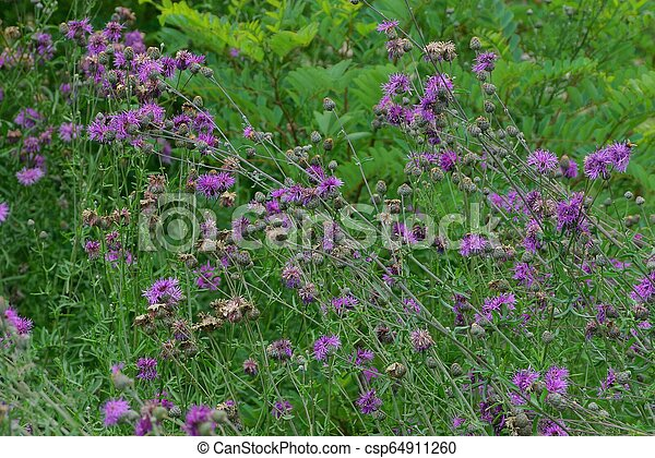 Thickets Of Wild Green Bushes And Grass With Thistle Flowers In