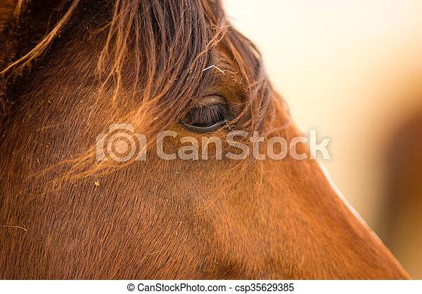 Wild horse face portrait oregon bureau of land management. adoptable
