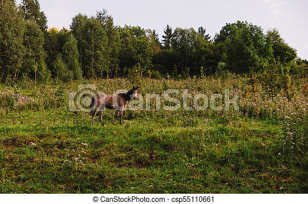 wild horse on a meadow in the mountains - csp55110661