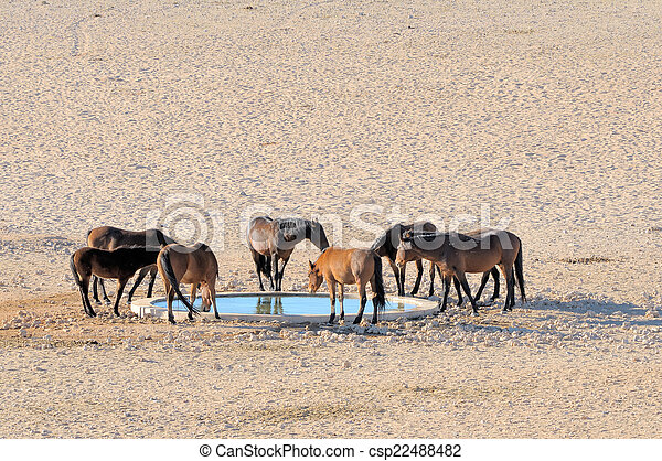 Wild horses of the Namib  - csp22488482