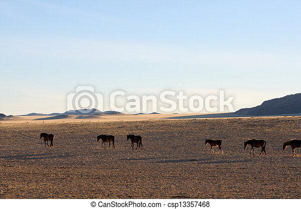 Wild horses of the Namib  - csp13357468