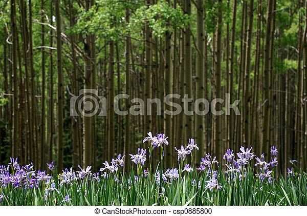wild, iris - csp0885800