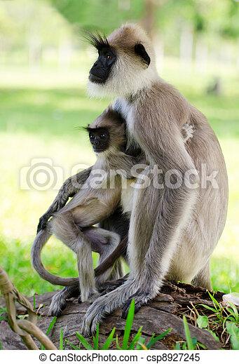Wild monkey with baby - csp8927245