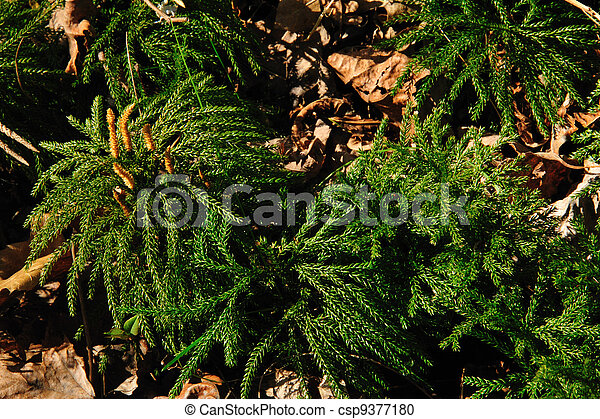Wild Fan Club Moss - csp9377180