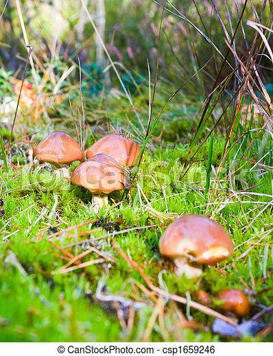 wild mushrooms - csp1659246