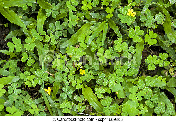 Wild Natural Green Vegetation With Three Small Yellow Flowers Close
