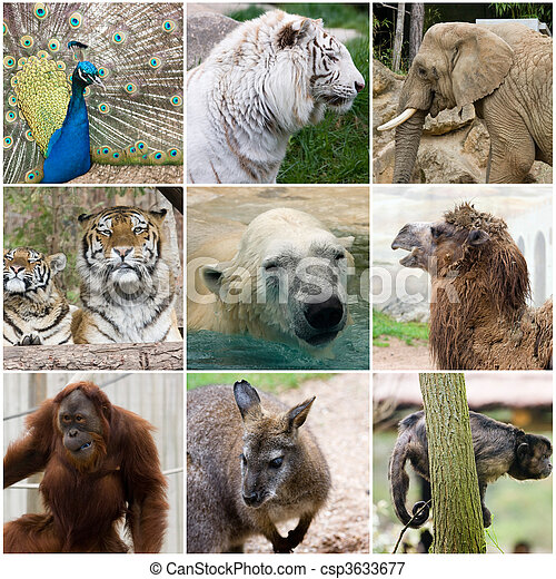 Wild Nature Collage A Photo Of Some Animals
