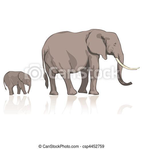 wild, olifanten - csp4452759