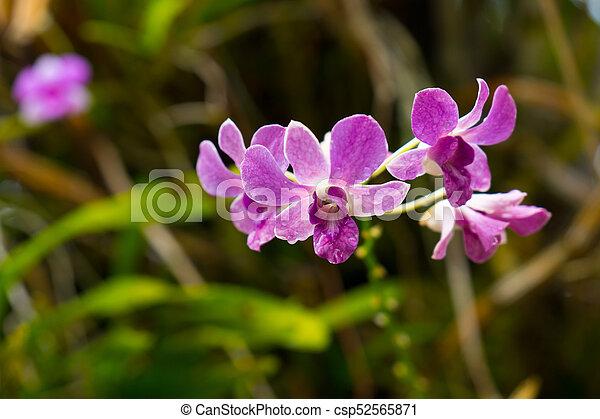 Wild orchid close up macro - csp52565871