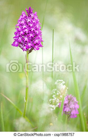wild orchid flower - csp1988757