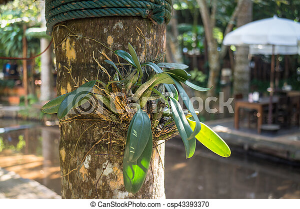 Wild orchid plant on tree - csp43393370
