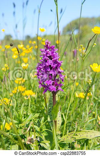 Wild orchid - csp22883755