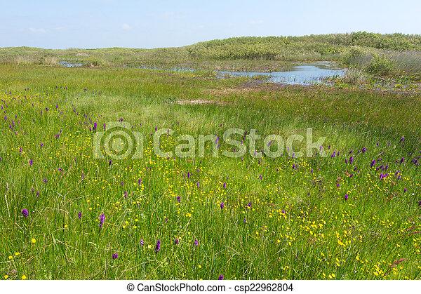 Wild orchids in landscape - csp22962804