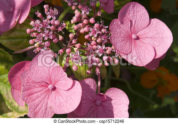 Wild pink irish flowers wild pink flowers in the irish countryside wild pink irish flowers csp15712246 mightylinksfo