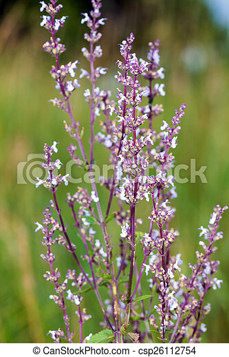 Wild pink spring flowers on green meadow stock images search stock wild pink spring flowers on green meadow csp26112754 mightylinksfo Image collections