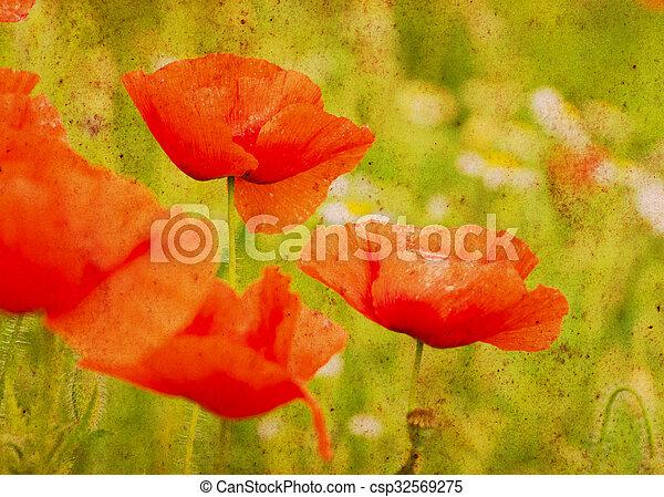 wild poppy flower - csp32569275