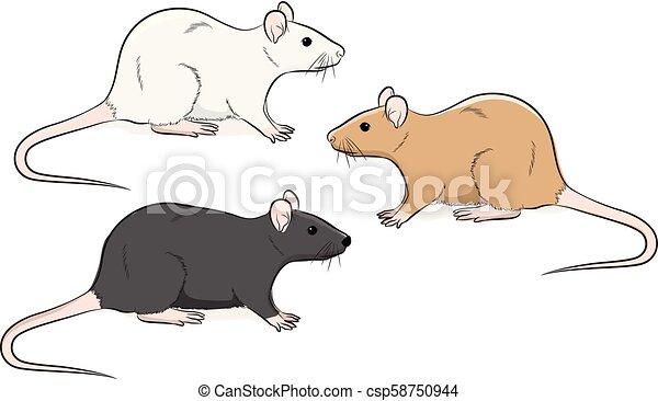 wild rat vector illustration https www canstockphoto com wild rat vector illustration 58750944 html