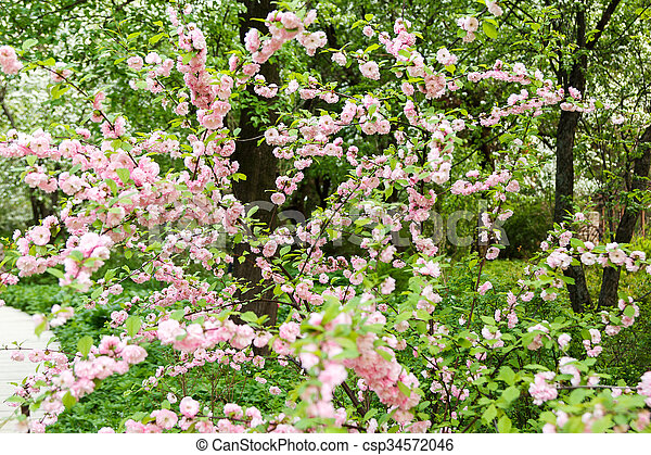 Wild rose bush with pale pink flowers wild rose bush blooming pale wild rose bush with pale pink flowers csp34572046 mightylinksfo