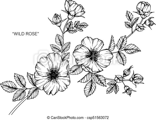 Wild rose flower drawing and sketch with black and white vectors wild rose flower drawing and sketch with black and white line art mightylinksfo Gallery