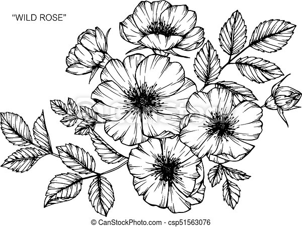 Wild rose flower drawing and sketch with black and white vectors wild rose flower drawing and sketch with black and white line art mightylinksfo