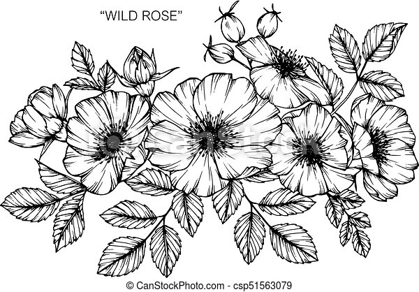 Wild rose flower drawing and sketch with black and white line art mightylinksfo