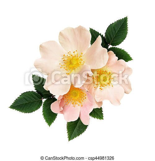 Wild Rose Flowers Arrangement Isolated On White