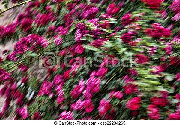 Wild Roses - csp22234265