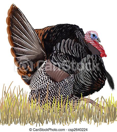 Wild Turkey - csp2640224