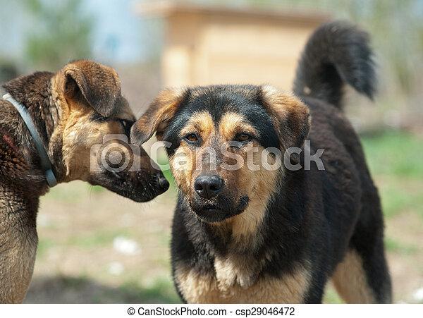 Wilde Hunde in Schutz - csp29046472