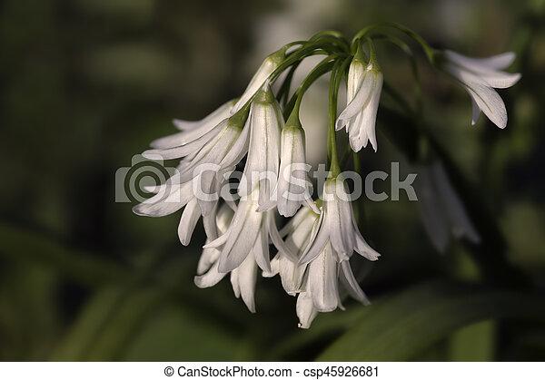 Wild white flowers european wild white flowers early spring wild white flowers csp45926681 mightylinksfo