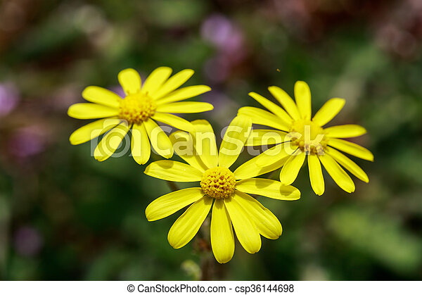 Wild Yellow Flowers On Field Closeup