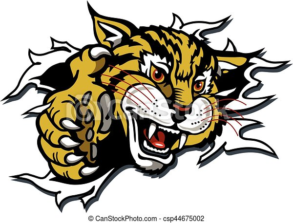 wildcat mascot wildcat or bobcat mascot ripping through the rh canstockphoto ca