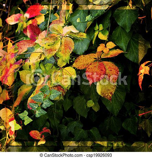 wilde blume, kleingarten, sonnenlicht, morgen - csp19926093
